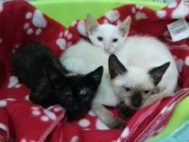camada gatitos