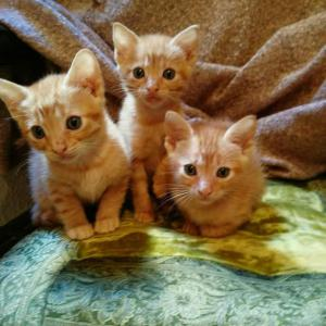 camada gatitos naranjas